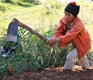 Project Sekong 2012: Villages move closer to doubling their rice crop. The paths of the new irrigation ditches are cleared of UXO.