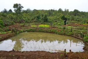 Project Sekong 2012: Fishponds offer hope for improved diet.