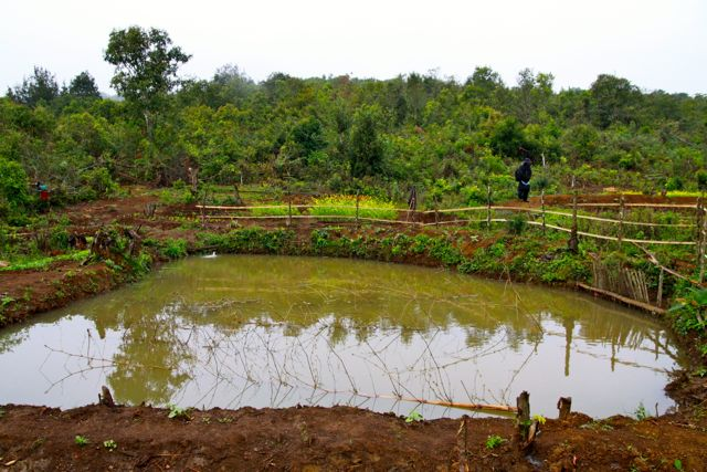 Project Sekong 2013: Were Clearing Land So Villagers Can Dig Fishponds, An Important Source Of Protein